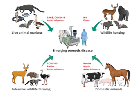 Emerging Zoonotic Diseases: Should We Rethink the Animal–Human Interface?