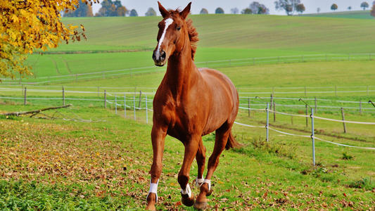 Horse nutrition Prebiotics may do more harm than good