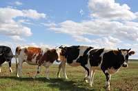 Drug-resistant genes spread through environment, not meat products