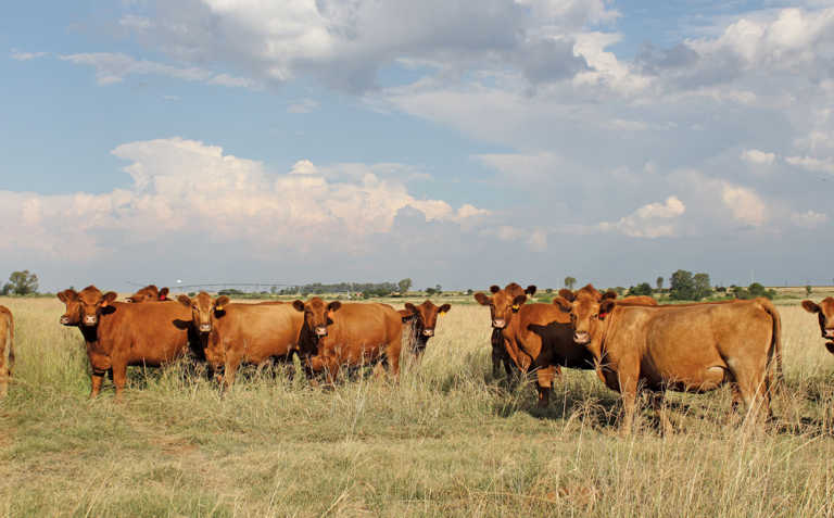 5 Cattle diseases that can kill your business