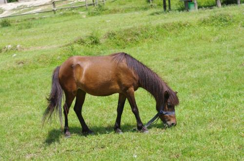 Laminitis research to help save horses and ponies