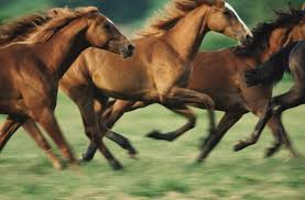 Mystery about history of genetic disease in horses