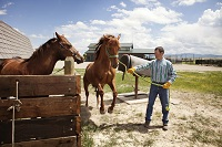 Equine specialist warns horse owners of dangerous virus