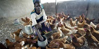 Humans, livestock in Kenya linked in sickness and in health