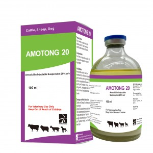 AMOTONG 20  Amoxicillin suspension 20%