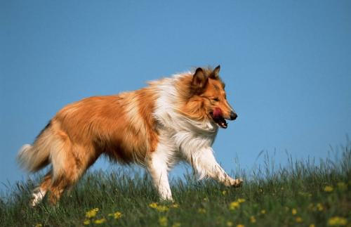 An active lifestyle reduces fearfulness in dogs – differences between breeds are great