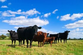 Beef Production Insights on Carbon, Methane and Feeding the Future