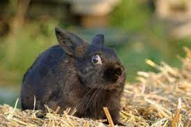 Causes of stress of rabbits