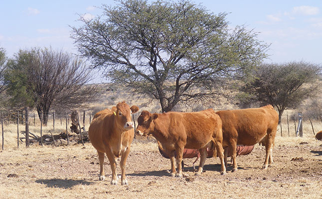 Grave concern for condition of Namibia's FMD-protection fence