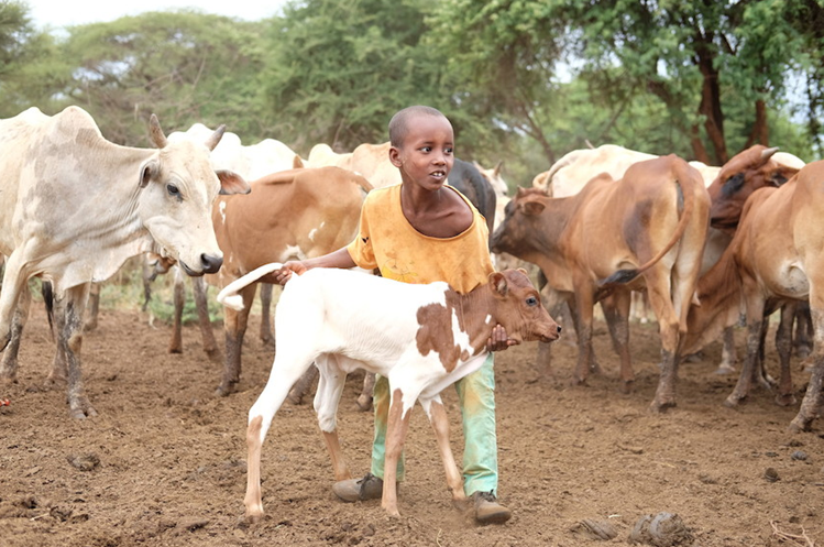 OIE's Global Burden of Animal Disease (GBAD) research programme secures more funding
