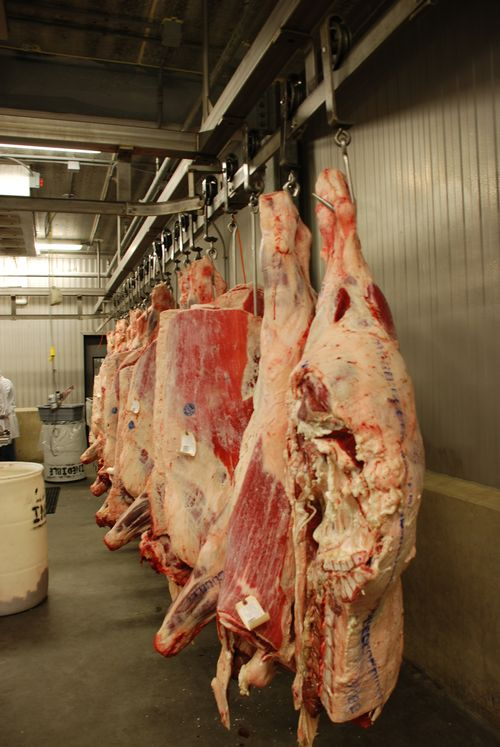 Planning and managing direct marketing opportunities for beef