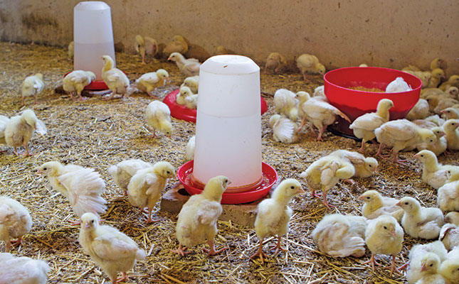 Poultry litter to biogas adding more value to farm waste