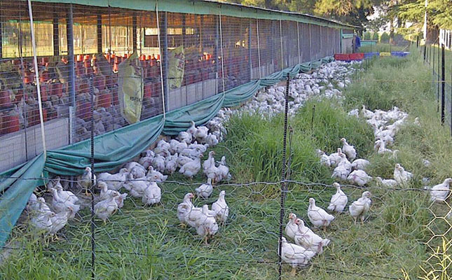 Success with premium free-range chickens