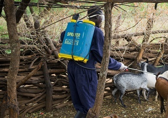 Supporting Ugandan women to keep goats healthy through COVID-19 pandemic
