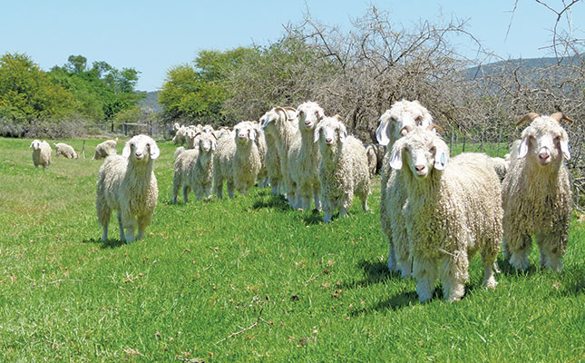 The fertility factor in mohair success