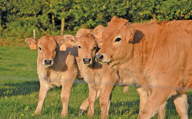 The importance of having a breeding season