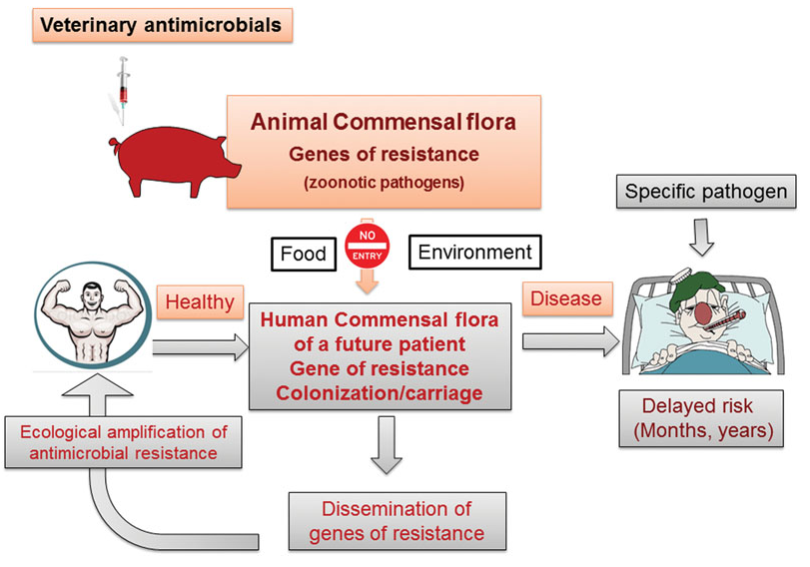 Veterinary Medicine Needs New Green Antimicrobial Drugs